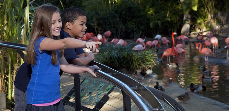 Zoo- two kids with flamingos